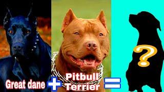 Top 10 Great Dane Mix Dog Breeds || Palakkadan Pets