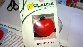Багира F1 семена томата (Clause), Антифейк  Часть 34(, 2015-07-24T09:52:53.000Z)