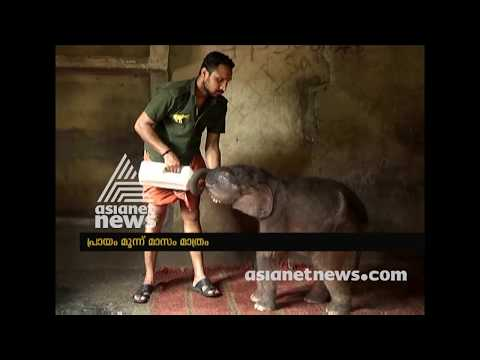 New guest in Kottoor Elephant Rehabilitation Centre