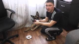 я и мой хвост. как стричь когти собаке.(канал существует на пожертвования зрителей. Paypal: medwed172@mail.ru., 2014-01-20T07:50:14.000Z)