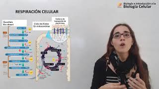 Biología Celular: Respiración celular (10/05/19)