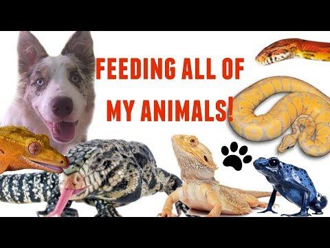 FEEDING ALL OF MY ANIMALS!