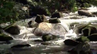 那珂川上流の急流の音!脊振雷山県立自然公園 南畑公園(福岡県)