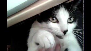 Кошка кайфует от того, что ей гладят пузо