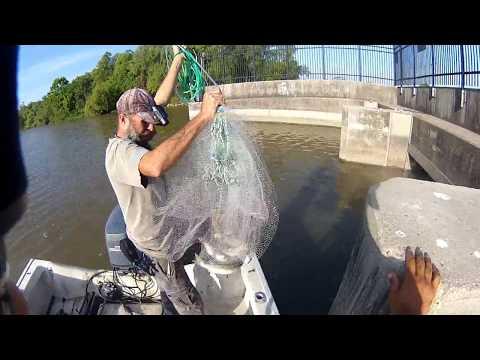 Nonstop Gaspergou with M.Hood Fishing