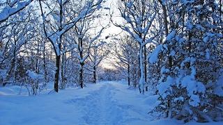 الشِّتَاء - зима