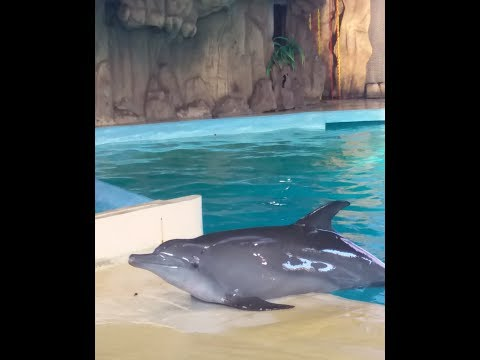 FUNNIEST DOLPHINS SHOW THEIR INTELLIGENCE AT seaworld ANCOL