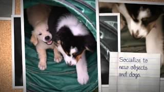 Animal Wellness Center Of Maple Grove: Puppy Socialization Class