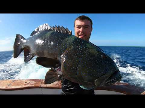 Spearfishing Coral Trout On The Great Barrier Reef | Catch And Cook Ep 12