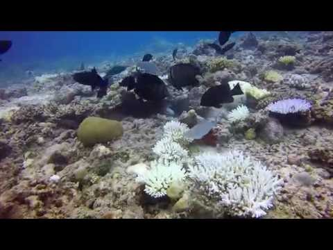 Moray Eel Vs. Porcupinefish