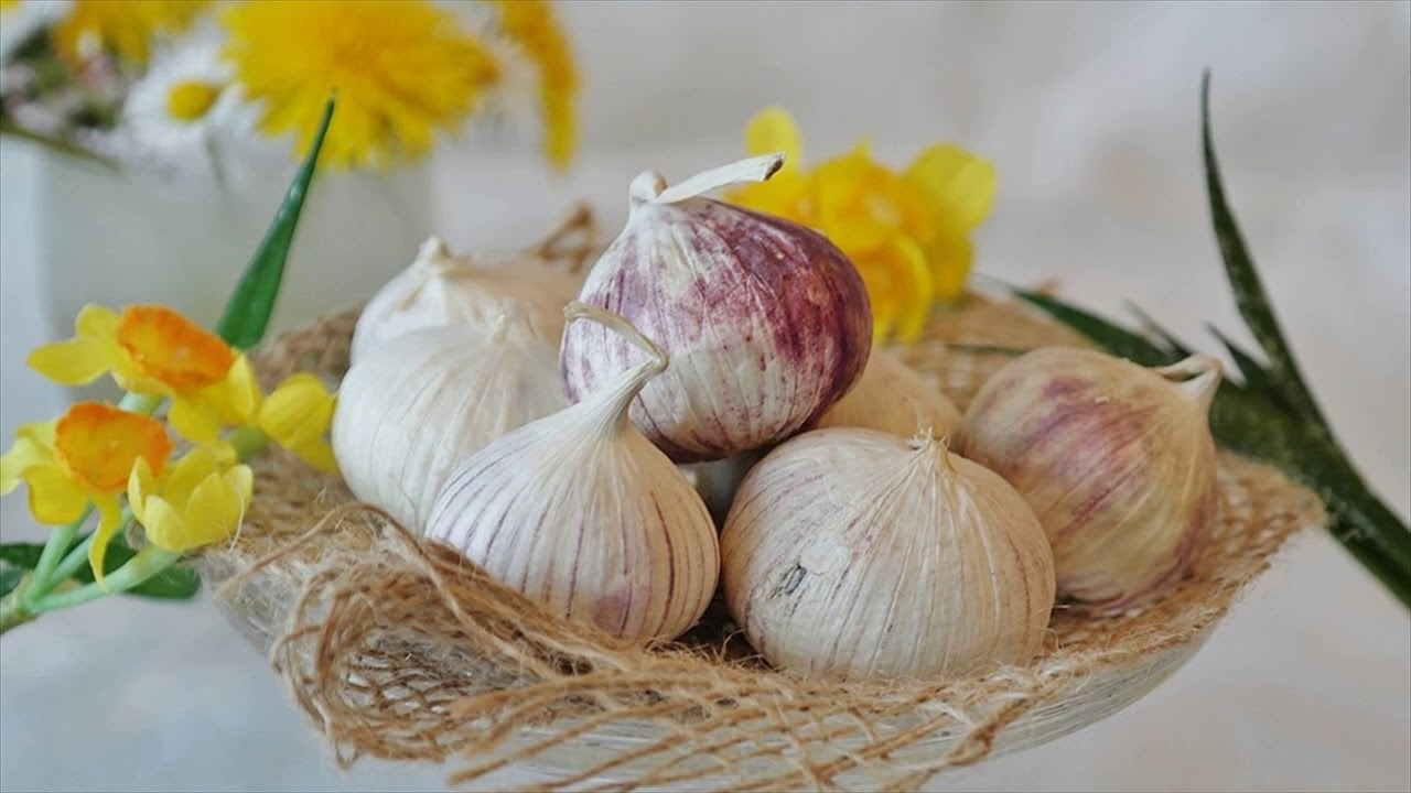 Garlic Spray For Mosquito Repellents- How To Use