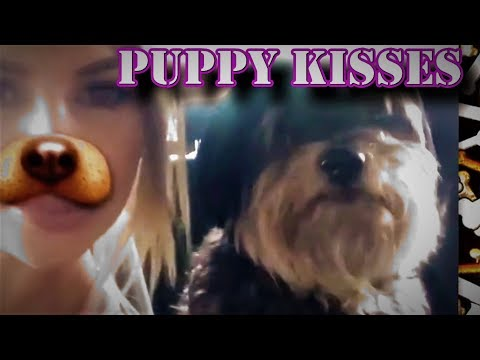 Puppy Can't Stop Kissing Favorite Girl   The Funny Dog Car Ride