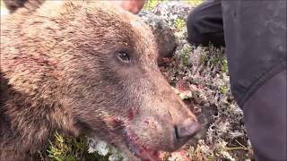 Swedish bear hunt - cut from episode