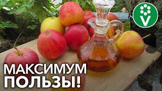 сЕКРЕТЫ ПРИГОТОВЛЕНИЯ ЯБЛОЧНОГО УКСУСА. Эти нюансы сделают УКСУС полезным и вкусным!