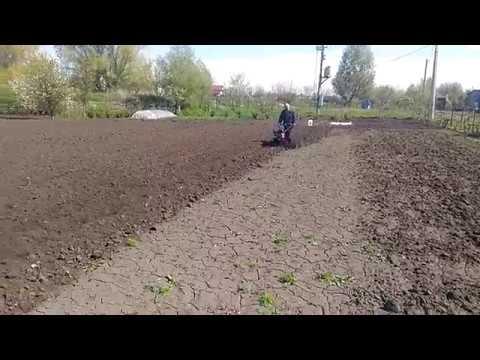 Обработка почвы фрезой перед посадкой картофеля.