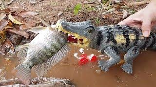 Cá sấu khổng lồ tấn công đàn cá ( Crocodile) | Nhạc thiếu nhi | TOY CHANNEL