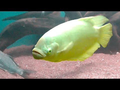 Second Largest Aquarium In India - My Bangalore Aquarium Tour