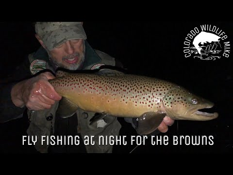 Fly Fishing At Night For The Browns