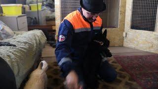 Приучаем собаку к расчесыванию. Скотч-терьер Тяпа.