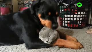 Cats and Dogs Interacting  Cats and Dogs Being Friends Compilation