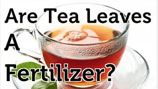 Are Tea Leaves an Organic Fertilizer?