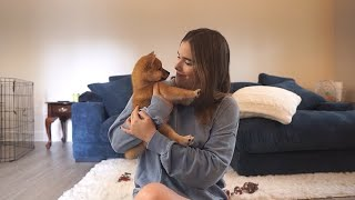 first 24 hours with my shiba inu puppy! | VLOG