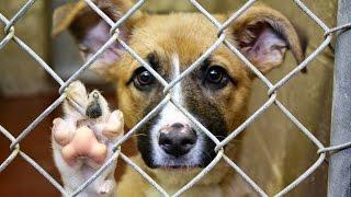 Las Vegas Bans Pet Farm Sales