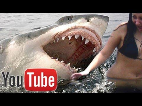 10 Shocking Shark Attacks Caught on Camera