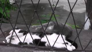 Крым. Коты на курорте Ялта.