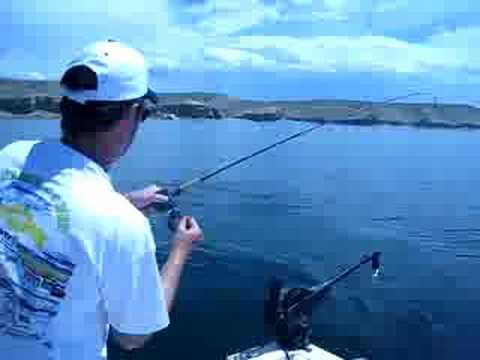 Flaming gorge 8 03 08 video 4 kokanee salmon fishing for Flaming gorge fishing report