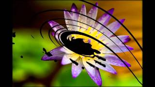 лотос цветы