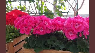 Выставка первоцветов в Ботаническом саду от фотомастера Татьяны Плотниковой