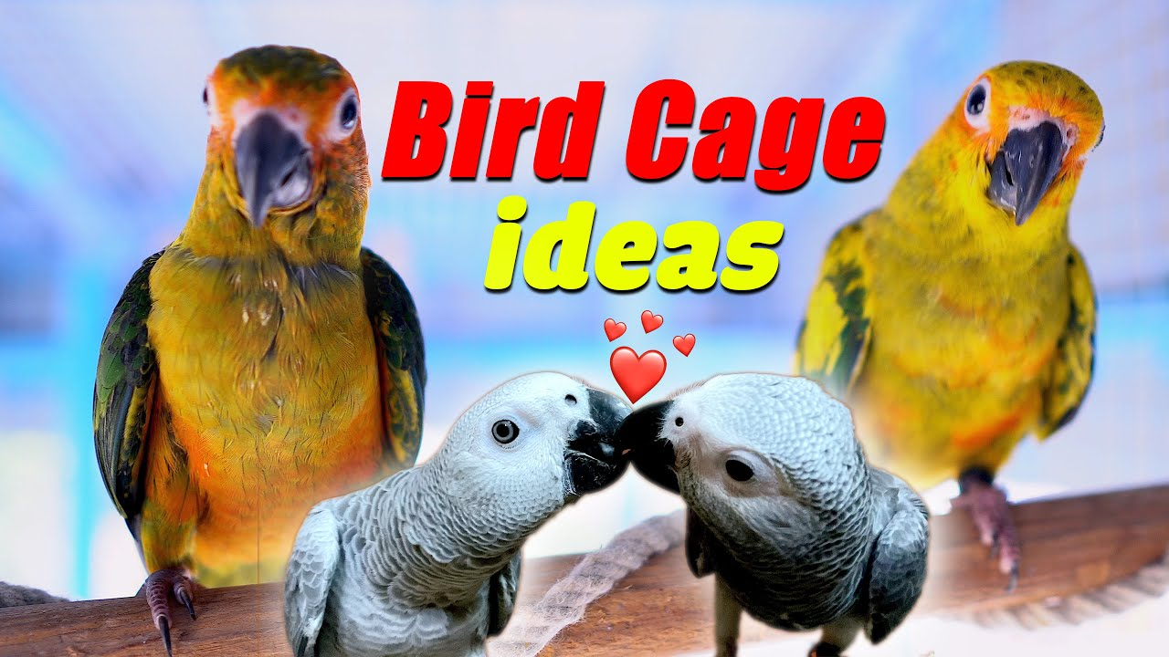 Bird cage ideas for parrots ❤️ Bebo fall in love ❤️