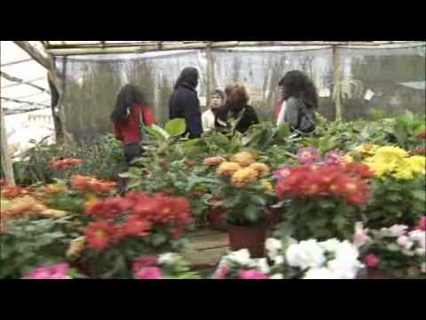 vivero santa isabel youtube