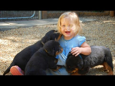Rottweiler Puppy Playing with Babies and Kids Compilation