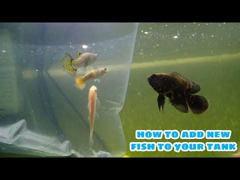 HOW TO ADD FISH  TO YOUR AQUARIUM | IN TELUGU | DIY AQUASCAPING|