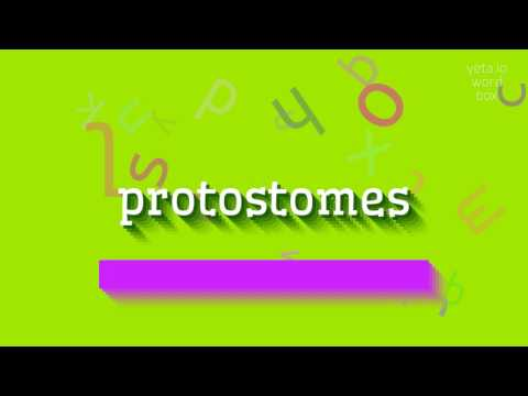 "How to say ""protostomes""! (High Quality Voices)"