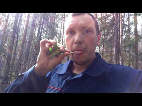 Муравейник в лесу. Муравьиная кислота.