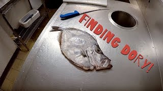 Finding John Dory - A Fish Cooking Story