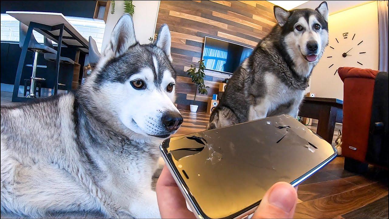 Собаки сгрызли iphone 11 pro max / Рум Тур / Мы переехали в Новый Дом !