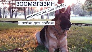 Собака в машине. Порядок перевозки собаки в машине в Европе. Dog in Europe