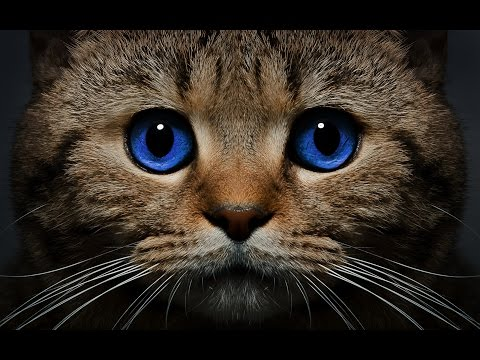 Cat breeds породы кошек