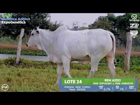 LOTE 24 - Leilão Genética Aditiva ExpoGenética 2019