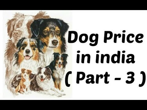 Dog price in india | Dog price list