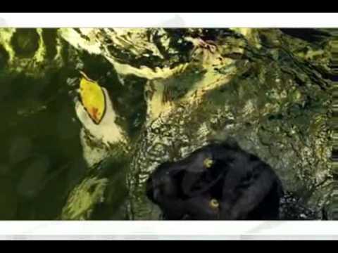CHIAPAS INTITUCIONAL KARAOKE   YouTube