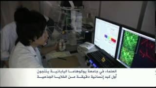 أول كبد إنسانية من خلايا جذعية باليابان