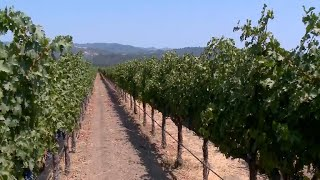 Wineries running low on workers