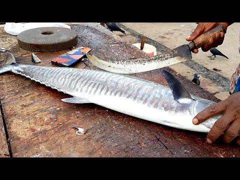 seer-fish-cutting-|-fresh-fish-cutting-skill-|තෝරා