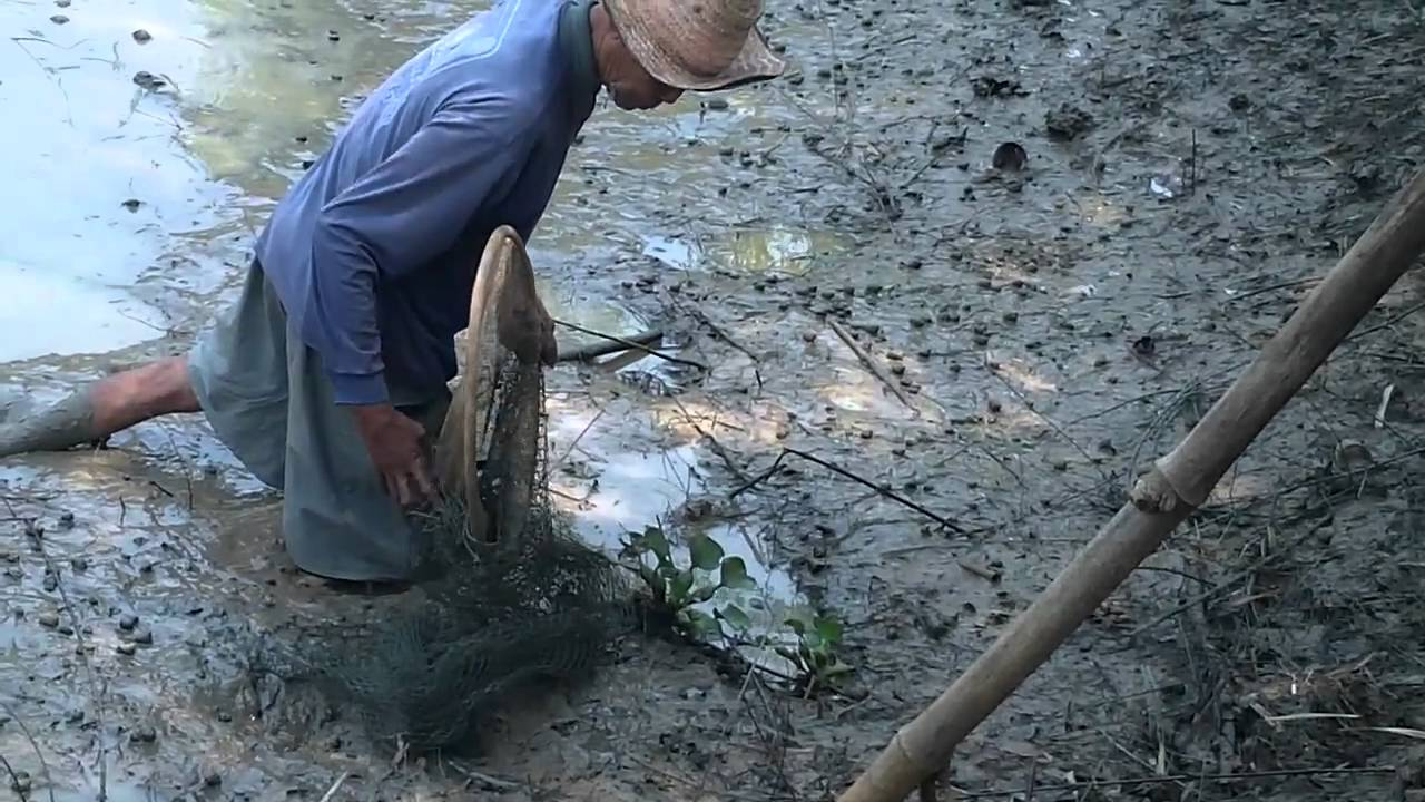 Day 12 bou yai fishing for mud and cat fish youtube for Big 5 fishing