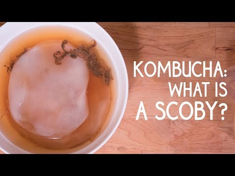 Kombucha: What is a Scoby?